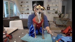Download My Dogs Try On Halloween Costumes 3 Mp3 and Videos