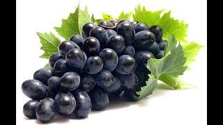 Производство саженцев винограда в России