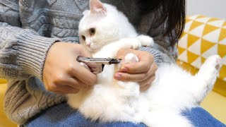 ENG) The cat clings to the owner's arm to endure the hated nail clipping!