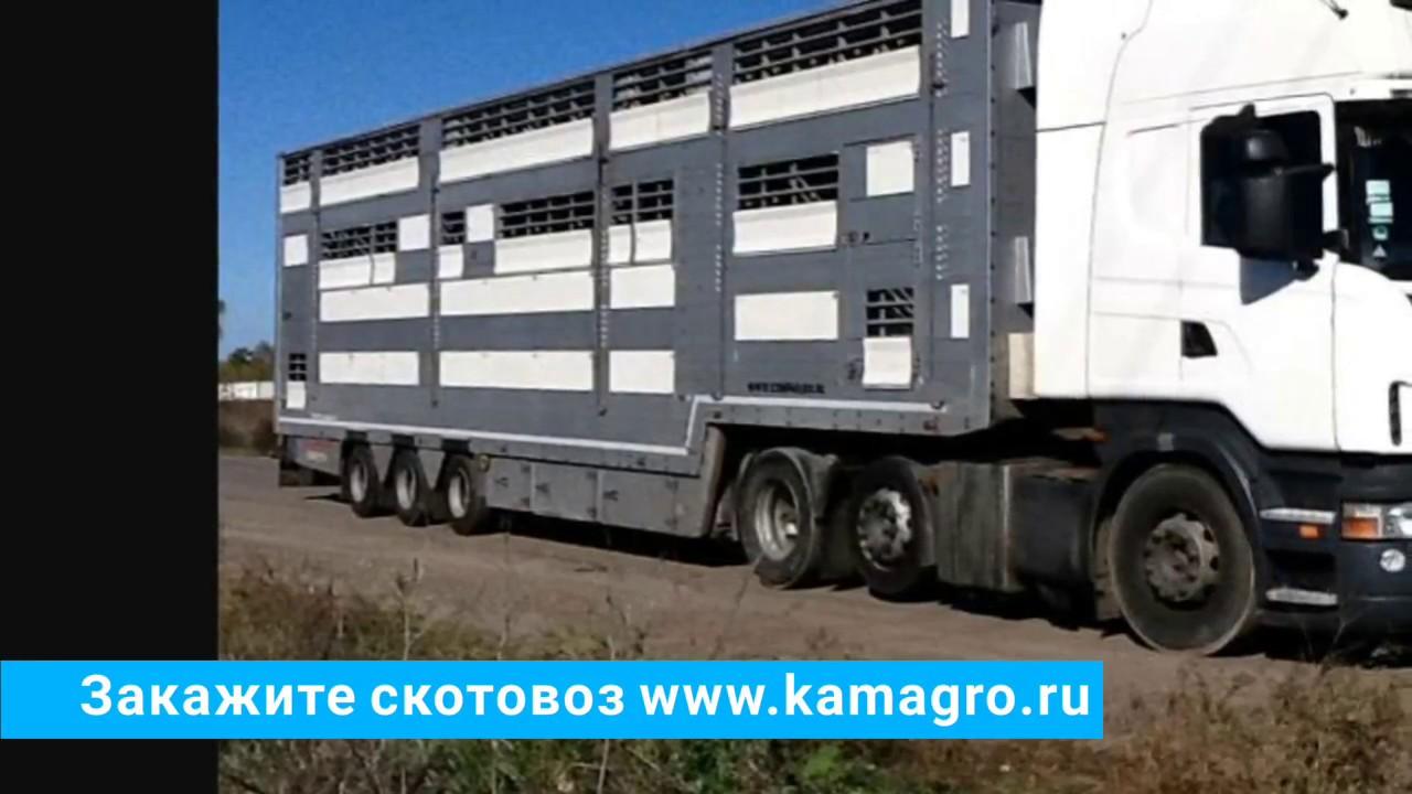 Купить продать быки по оптовым ценам: 45 предложений от. Дорого закупаем быков,коров живым весом, работаем по всей украине,самовывоз.