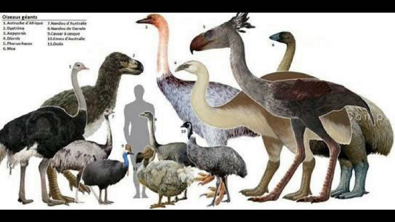 All Prehistoric Birds(informative)U.P - YouTube - photo#12