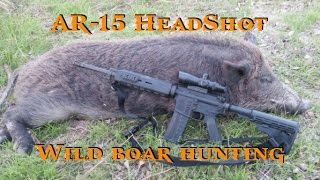 Hunting Hogs with AR-15 - Ear Hole Headshot