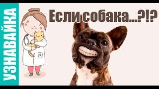 Узнавайка- Если собака отравилась, не ест и кусается?!(Продолжаем отвечать на запросы Яндекса. Сегодня разберем запрос- Если собака?! и вот какие подсказки дает..., 2016-03-25T21:12:39.000Z)