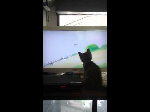แมวน้อยดูการ์ตูน