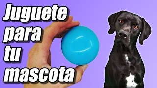 Juguete para tu mascota, cómo se hace