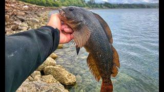 Oregon Coast Jetty Fishing for Greenling and Rockfish - 俄勒冈海边岸钓石头鱼和老鼠斑/星斑