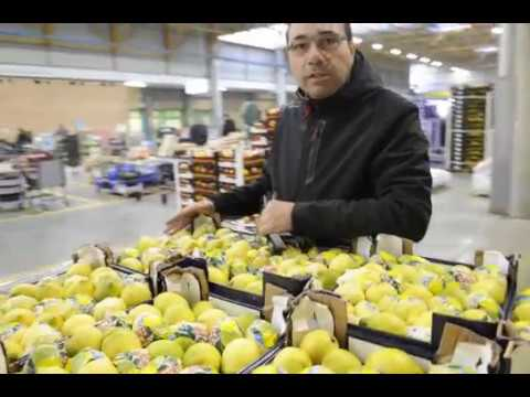 Mercato limoni biologici