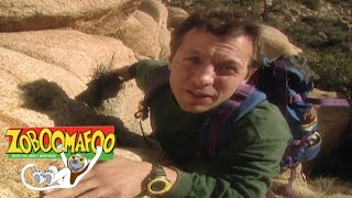 🐵 🐒Zoboomafoo 110 - Climbing | HD | Full Episode 🐵 🐒