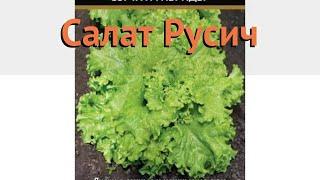 Салат обыкновенный Русич Листовой (rusich) 🌿 обзор: как сажать, семена салата Русич Листовой