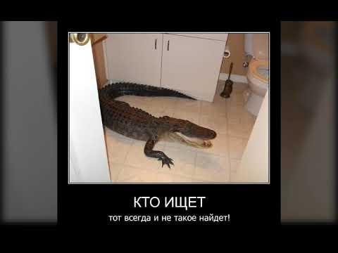 Я крокодил крокожу и буду крокадить