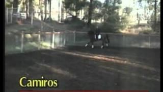 Camiros, Holsteiner Stallion at Fox Fire Farm