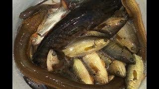 Dở xà di, dở lú bất ngờ dính toàn mồi bén không nha  Catch fish in Viet Nam countryside.