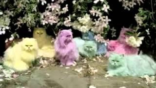 Over the Rainbow Jingle Cats