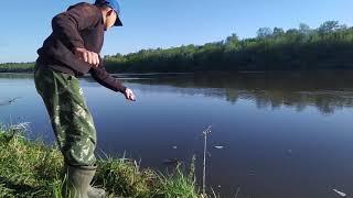 Удачный день на рыбалке Рыба выскользнула из рук