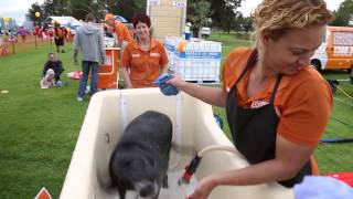 Walk To Fight Animal Cruelty At Rspca's Million Paws Walk 2015