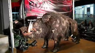 The giant animatronic pig from the horror film BOAR