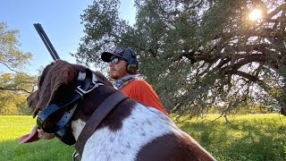 Dove Hunting in Texas with a German Shorthaired Pointer! // BIRD DOG