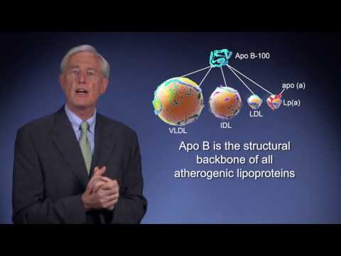 Apolipoprotein B (transglutaminase substrate?) Atherosclerosis