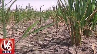 Ground Report On Water Level Dead Storage In Singur Project    Medak   V6 News