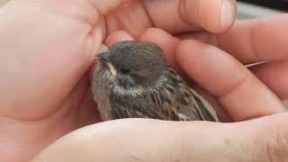 Jak  wychowaliśmy pisklę dzikiego ptaszka