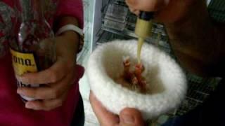 Mis primeros  canarios timbrados  espanoles de  la temporada 2011