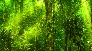 Relaxing Exotic Forest Ambience - Birds Chirping, No Music (10 Hours)