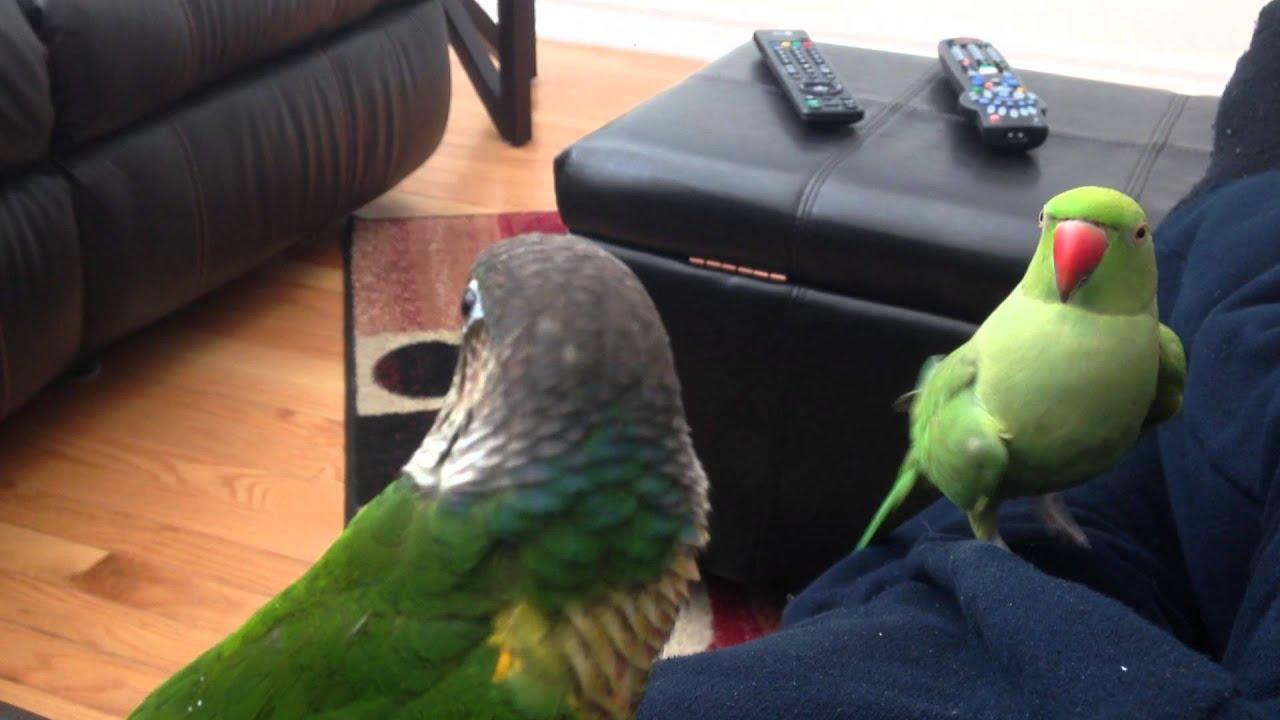 Worlds funniest talking parrot