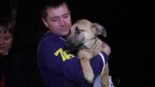 """Спасение животных из приюта """"Бано Эко Вешняки"""""""