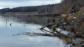 Рыбалка на окуня на таежной протоке Спиннинг отводной поводок Пока не первый лед