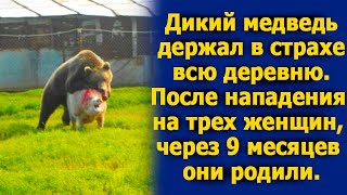 Дикий медведь держал в страхе всю деревню. После нападения на трех женщин они родили через 9 месяцев