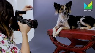 How to be a dog photographer