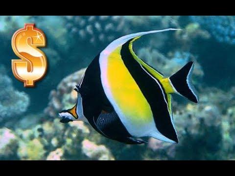 Los 10 peces mas vendidos en el mundo youtube for Peces de agua estancada