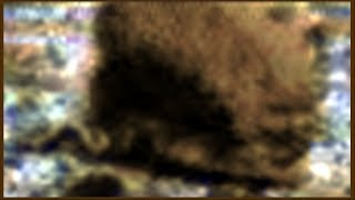 French Woolly pig faced Rat on Mars 🙂 10/31/2017