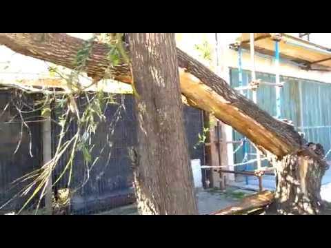 Un árbol cayó sobre el cableado de electricidad y puso en peligro a una familia