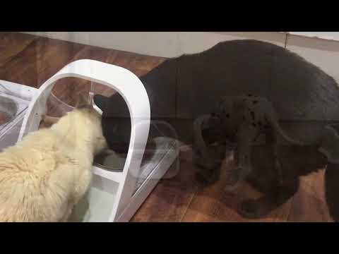 surefeed-microchip-pet-feeder-in-action