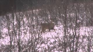 The Fever - Alberta Whitetail and Mule Deer Hunt