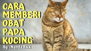 [CAT TIPS] Cara Memberi Obat Untuk Si Kucing