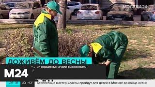 """Смотреть видео В """"Аптекарском огороде"""" расцвела самая большая кувшинка в мире - Москва 24 онлайн"""
