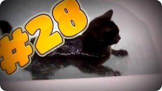 Приколы с животными №28   Кот в ванной  Смешные животные  Animal videos