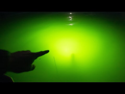 Big Bass In Underwater Lights! (Fishing Lake Fork)