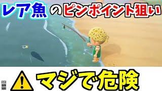 【あつ森】レア魚のピンポイント狙いしてみたら精神が崩壊した【シーラカンス】