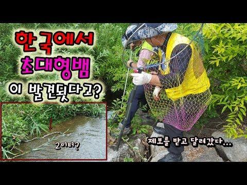 한국에 대형뱀이 나타났다고..?말이 안되지만