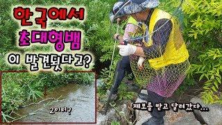 한국에 대형뱀이 나타났다고..?말이 안되지만 실화다..??[정브르]