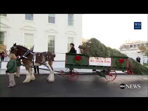 First Lady Melania Trump receives White House's 2017 Christmas tree