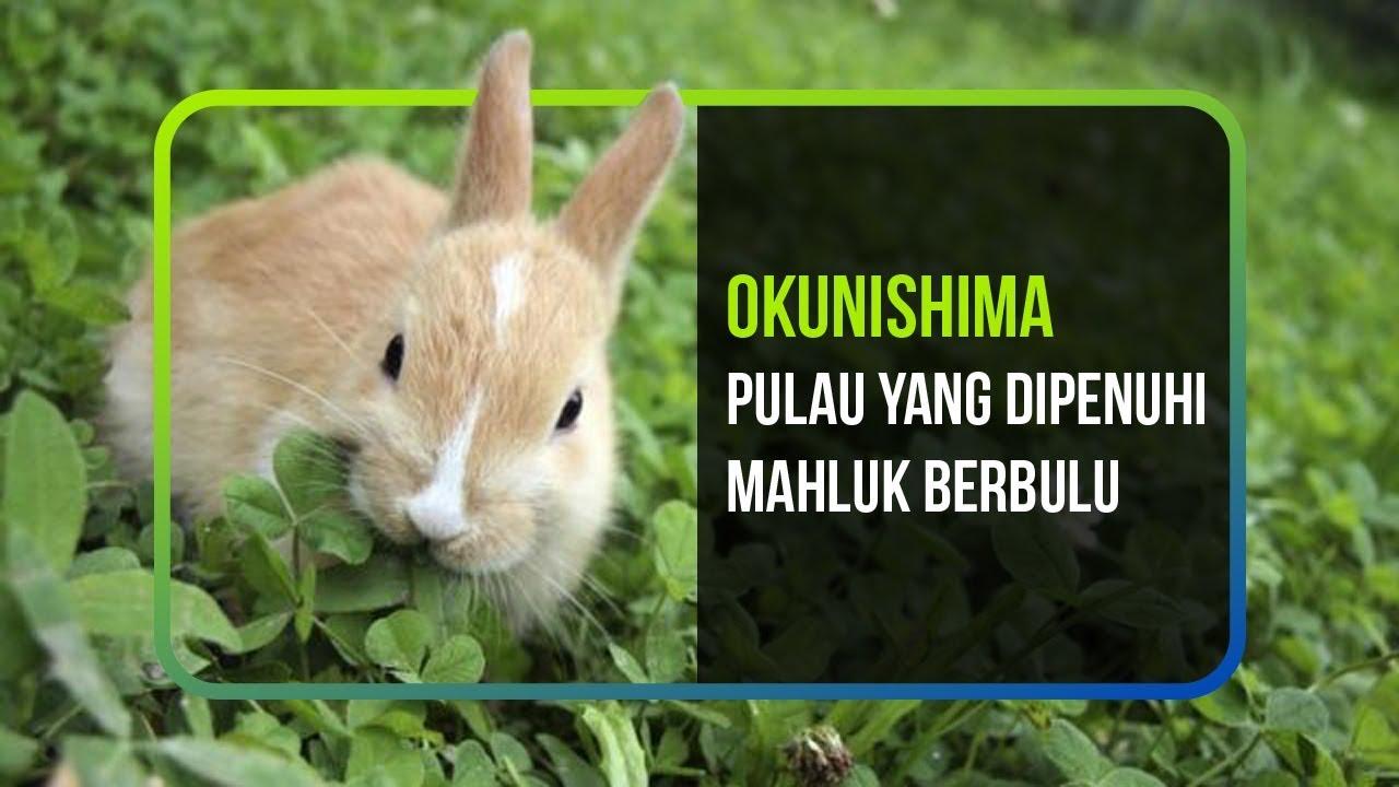 OKUNISHMA, PULAU YANG DIPENUHI MAHLUK BERBULU
