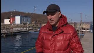 Морское собрание. Военные водолазы-глубоководники находят общий язык с дельфинами и осьминогами