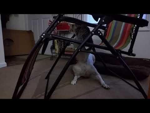 Lex the Rescue Dog - Yummy Kitten