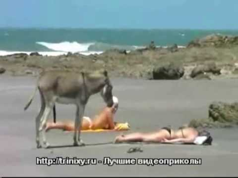 Hot videos girl with donkey