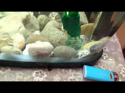 test-de-mon-aspirateur-de-fond-sera-cleaner-www.aquariophilie.ma