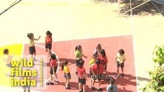 Basketball court: The Shri Ram School, Delhi